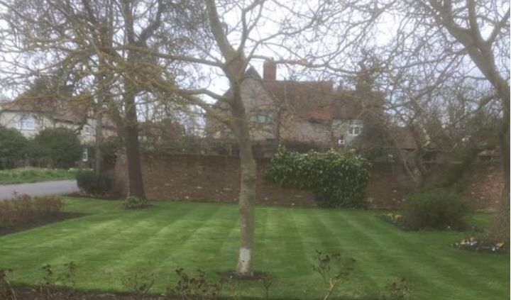 Lawn and trees Easthorpe